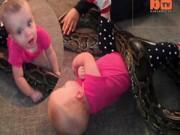 Chuyện lạ - Clip rùng mình bé gái 14 tháng tuổi chơi với trăn