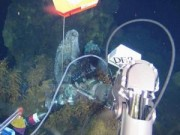 Thế giới - Tàu lặn Trung Quốc săn vàng dưới đáy Ấn Độ Dương