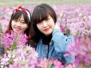 """Bạn trẻ - Cuộc sống - Vườn hoa đẹp nhất Hà Nội """"hút"""" chân giới trẻ Hà thành"""