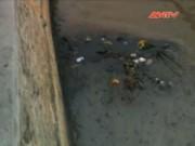 Bản tin 113 - Chưa thu hết số dầu tràn của nhà máy nhiệt điện Uông Bí