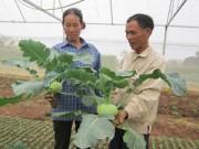 """Thị trường - Tiêu dùng - """"Lão khùng"""" trồng rau trái vụ, thu trăm triệu"""
