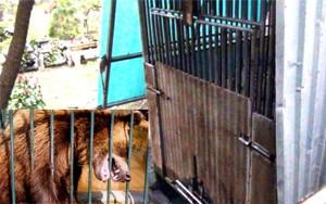 Tin tức trong ngày - Bé bị gấu cắn: Kiểm lâm không biết do chủ nuôi không báo