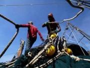 Tin tức trong ngày - Thái Lan muốn đưa tù nhân lên tàu cá làm việc