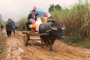 Bạn trẻ - Cuộc sống - Rước dâu bằng xe trâu gây ấn tượng ở Nghệ An