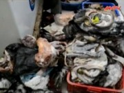 Thị trường - Tiêu dùng - Phát hiện kho ướp lạnh động vật hoang dã tại Quảng Ngãi