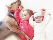 Bạn trẻ - Cuộc sống - Những tư thế ngủ đáng yêu của hai anh em và chú chó