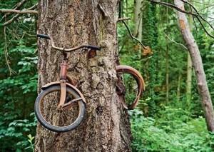 """Chuyện lạ - Khám phá cây """"ăn xe đạp"""", cây biết """"ôm"""""""