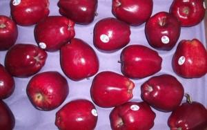Sức khỏe đời sống - Vi khuẩn trong táo Mỹ nhập khẩu có thể gây nhiễm trùng máu
