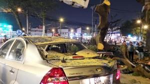 Tin tức trong ngày - Cây xanh bật gốc đè 2 ô tô, nhiều người thoát chết