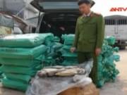 Video An ninh - Quảng Ninh: Bắt liên tiếp 2 vụ vận chuyển thực phẩm bẩn