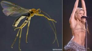 Phi thường - kỳ quặc - Những loài vật có tên gọi đặc biệt nhất thế giới