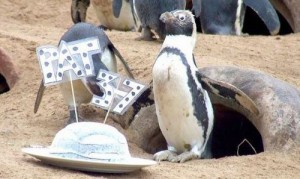 """Phi thường - kỳ quặc - """"Cụ"""" chim cánh cụt cao tuổi nhất nước Anh mở tiệc sinh nhật"""