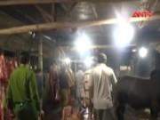 Video An ninh - Quảng Nam: Đột kích hai cơ sở bơm nước vào bụng bò