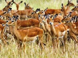 Tin tức trong ngày - Xây dựng Công viên động vật hoang dã tại Ninh Bình