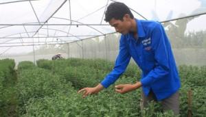 Bạn trẻ - Cuộc sống - Bỏ cơ hội làm việc ở nước ngoài, về quê làm nông nghiệp