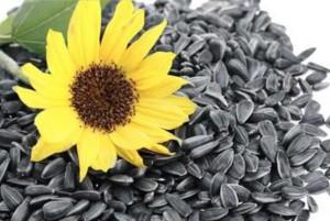 Sức khỏe đời sống - Tết ăn hạt hướng dương có lợi gì cho sức khỏe?