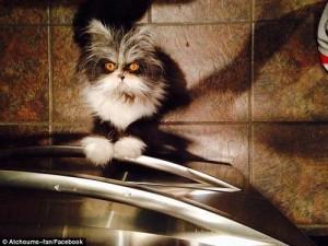 """Phi thường - kỳ quặc - Chú mèo với ánh mắt như muốn """"xé toạc linh hồn"""""""