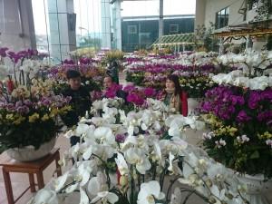Thị trường - Tiêu dùng - Phong lan hơn 60 triệu đồng/chậu vẫn đắt khách ở Hà Nội
