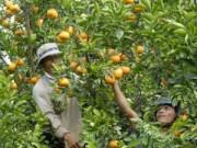 Giá cả - Hốt bạc nhờ bán trái cây bày mâm ngủ quả
