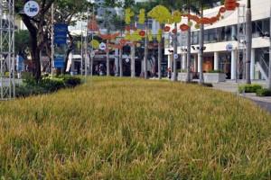 Tin tức trong ngày - Độc đáo: Tái hiện cảnh thôn quê giữa Sài Gòn