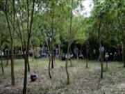 Vụ án nổi tiếng - Hành trình truy tìm hung thủ giết người trong vườn tràm