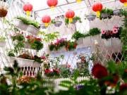 Bạn trẻ - Cuộc sống - Vườn hoa xuân tuyệt đẹp trên ban công 15m vuông