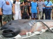 Chuyện lạ - Cận cảnh cá mập miệng rộng khổng lồ quý hiếm