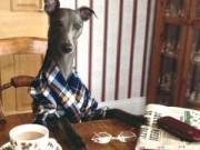 Phi thường - kỳ quặc - Chùm ảnh: Chú chó thích chụp ảnh như người