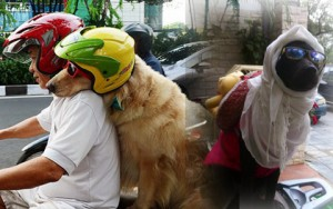 """Tin tức thời trang - """"Phát cuồng"""" với chó mèo mặc sành điệu khi xuống phố"""