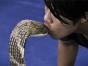 """Phi thường - kỳ quặc - Video: """"Đứng tim"""" xem chàng trai trêu chọc rắn cực độc"""