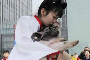 Phi thường - kỳ quặc - Trung Quốc: Thưởng Tết bằng... lợn