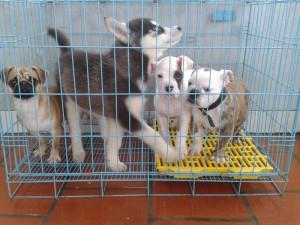 Thị trường - Tiêu dùng - Chi tiền triệu cho thú cưng... nghỉ Tết