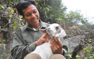 Tin tức trong ngày - Chuyện ít biết về con dê Ninh Bình