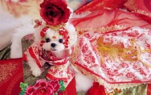 Thời trang chó mèo cận tết: Bạc triệu vẫn đắt hàng