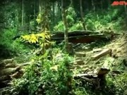 """An ninh Xã hội - Hành trình phá án: """"Nước mắt"""" của rừng"""