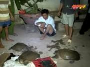 Video An ninh - Nửa đêm đột nhập nhà người quen, trộm ba ba về ăn Tết