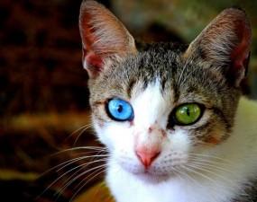 Phi thường - kỳ quặc - Những loài vật có đôi mắt hai màu khác lạ