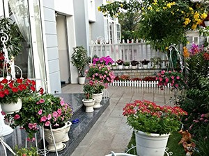 Ngắm vườn hoa tuyệt đẹp của nữ giảng viên ở TPHCM