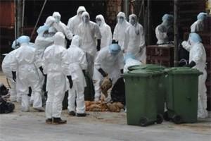 Sức khỏe đời sống - Xuất hiện người nhiễm cúm A/H9N2 đầu tiên