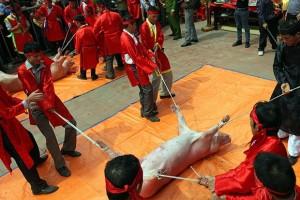 Tin tức trong ngày - Báo quốc tế nói gì về lễ hội chém lợn của Việt Nam?