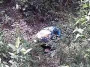 Video An ninh - Nữ SV chết trong rừng: Hé lộ nguyên nhân tử vong