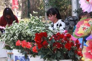 """Thị trường - Tiêu dùng - Đà Lạt: Người bán hoa hồng """"trúng đậm"""""""