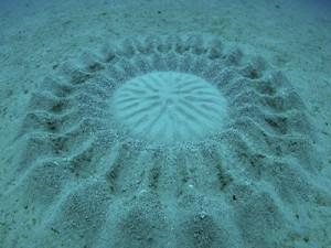 Giải mã  vòng tròn kỳ lạ  phát hiện dưới đáy biển Nhật Bản