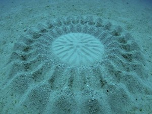 """Giải mã """"vòng tròn kỳ lạ"""" phát hiện dưới đáy biển Nhật Bản"""
