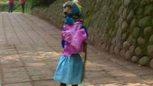 Bạn trẻ - Cuộc sống - Clip chú chó đáng yêu mặc váy, đeo cặp