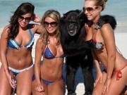 """Cười 24H - Những hình ảnh """"siêu hài"""" trên bãi biển"""