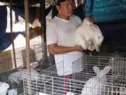 Thị trường - Tiêu dùng - Cử nhân công nghệ về quê nuôi thỏ New Zealand