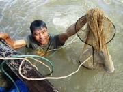 Tin tức trong ngày - Săn cá ngát 'khủng' trên sông Hàm Luông