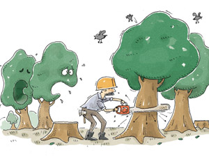 7 lý do để ủng hộ việc chặt cây ở Hà Nội