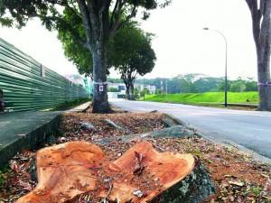 Thế giới - Nhìn ra thế giới: Chặt cây trái phép bị phạt 1,1 triệu USD